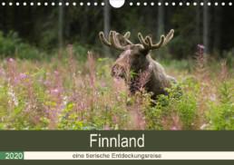 Alex Wünsch Alexandra Wünsch Einblick-Natur Fotografie Naturfotografie Kalender Naturfoto Finnland Tiere