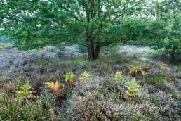 Alex Wünsch Alexandra Wünsch Einblick-Natur Fotografie Naturfotografie Deutschland Besenheide Heide NRW Wahner Heide