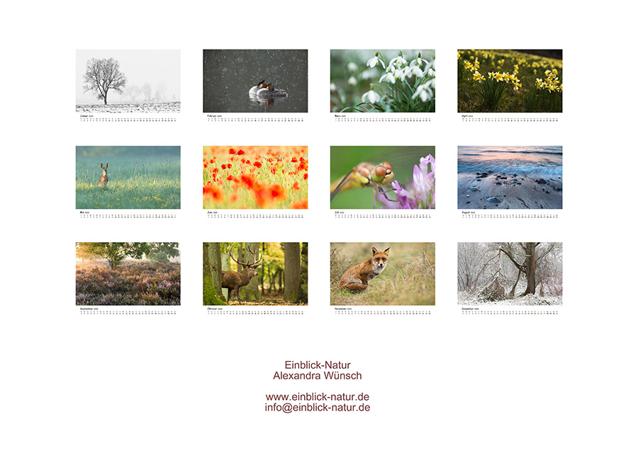 Einblick Natur Naturfotografie Kalender 2020 Alexandra Wünsch Naturfotos Deutschland
