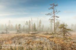 Alex Wünsch Alexandra Wünsch Einblick-Natur Fotografie Naturfotografie Finnland Sumpf Frost Herbst