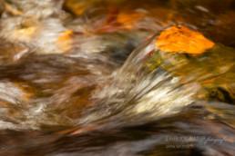 Alex Wünsch Alexandra Wünsch Einblick-Natur Fotografie Naturfotografie Herbst Wasser Buchenblatt
