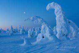 Alex Wünsch Alexandra Wünsch Einblick-Natur Fotografie Naturfotografie Winter Finnland Schnee Bäume eingeschneite Bäume