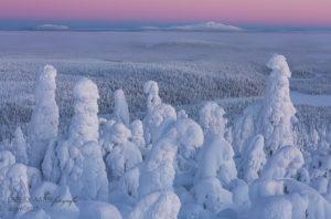 Alex Wünsch Alexandra Wünsch Einblick-Natur Fotografie Naturfotografie Winter Finnland Schnee Landschaft Packschnee
