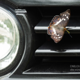 Alex Wünsch Alexandra Wünsch Einblick-Natur Fotografie Naturfotografie Großer Schillerfalter Schmetterling Auto Sommer