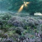 Alex Wünsch Alexandra Wünsch Einblick-Natur Fotografie Naturfotografie Heide Heideblüte