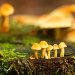 Alex Wünsch Alexandra Wünsch Einblick-Natur Fotografie Naturfotografie Herbst Pilze
