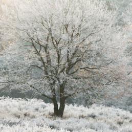 Alex Wünsch Alexandra Wünsch Einblick-Natur Fotografie Naturfotografie Winter Baum wahner Heide