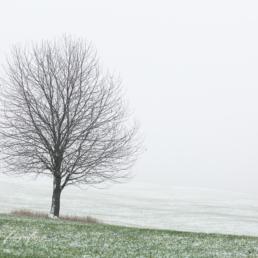 Alex Wünsch Alexandra Wünsch Einblick-Natur Fotografie Naturfotografie Winter Solitärbaum Bergisches Land