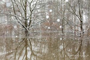 Alex Wünsch Alexandra Wünsch Einblick-Natur Fotografie Naturfotografie Winter Hochwasser Düsseldorf 2021 Tief Tristan