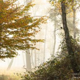 Waldvogel, Amsel, Turdus melua, Alexandra, Wünsch, GDT, Naturfotograf des Jahres 2021, Preis der Jury, Herbst, Deutschland