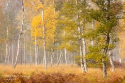 Waldvogel, Birken, Alexandra, Wünsch, GDT, Naturfotograf des Jahres 2021, Preis der Jury, Herbst, Deutschland, Herbstzeit