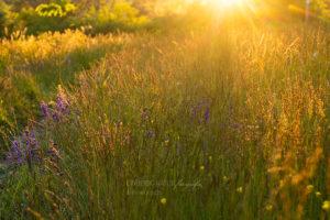 Alex Wünsch Alexandra Wünsch Einblick-Natur Fotografie Naturfotografie Frühling Sonnuntergang Sonnenstrahlen Wiese warmes Licht goldenes Licht