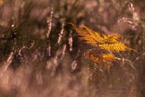 Alex Wünsch Alexandra Wünsch Einblick-Natur Fotografie Naturfotografie Sommer Heide Farn orange Altweiber